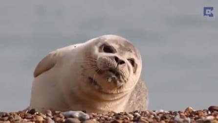 Avevate mai visto una foca fare una cosa del genere?