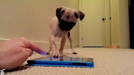 Il suo padrone avvia l'app dal tablet: la reazione del cane è tutta da ridere