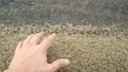 A prima vista ti sembrerà sabbia: non crederai a ciò che raccoglie