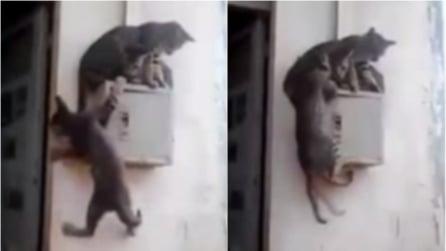 Non c'è spazio per tutti: il gattino si arrampica ed ecco cosa succede