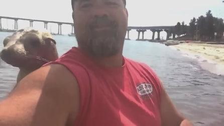 La foca salta sulla barca e fa amicizia col proprietario: un momento davvero unico