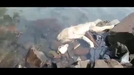 Misteriosa creatura dai tratti umanoidi galleggia nell'acqua: di cosa si tratta?