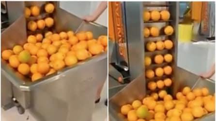 Mette le arance in questa macchina: l'invenzione geniale che vi farà venire l'acquolina in bocca