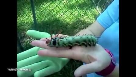 Trova un animale spaventoso nel suo giardino: ecco di cosa si tratta