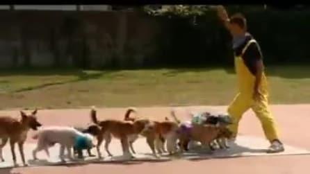 Tutti i cani vicino al padrone e poi parte il divertentisismo gioco
