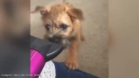 Punta il phon verso il cane: guardate cosa fa