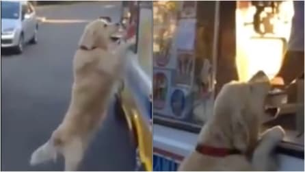 Si avvicina al carretto dei gelati e guardate questo cane che fa