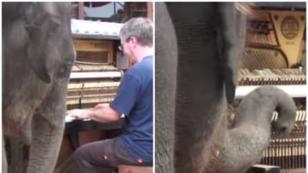 L'elefante si avvicina al pianista e quello che accade è meraviglioso