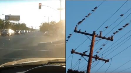 Lui è a bordo della sua auto: guardate cosa succede agli uccelli