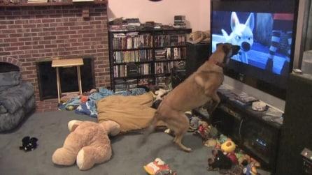 Il cane che adora guardare il cartone Bolt della Disney: fantastico!