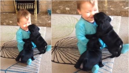 I due cuccioli di carlino gli saltano addosso, la reazione del bambino è dolcissima