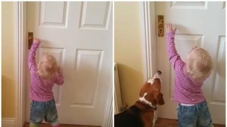 La bimba non riesce ad aprire la porta: guardate cosa fa il suo cane