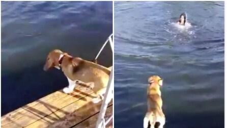 La padrona finge di annegare e la reazione del cane è immediata