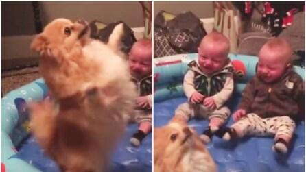 Il cane entra nella loro piscinetta: la reazione dei due gemellini è da morire dal ridere