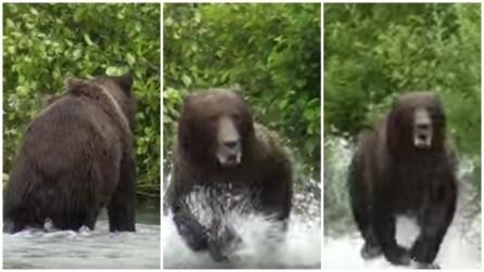 Cosa succede quando si è vicino ad un orso grizzly arrabbiato?