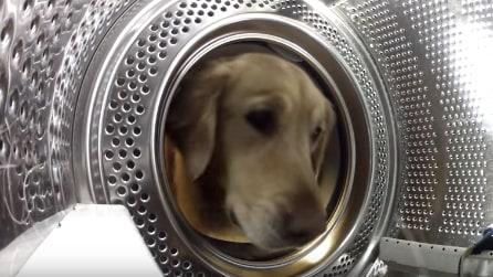 Mette una telecamera nella lavatrice e scopre cosa fa il suo cane: troppo tenero!