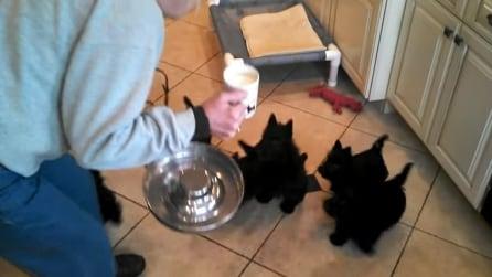 Versa il latte nella ciotola: fantastico quello che fanno questi teneri cuccioli