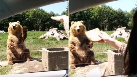 """L'orso fa """"Ciao, ciao"""", lei gli lancia il pane e lui lo afferra in modo sorprendente"""