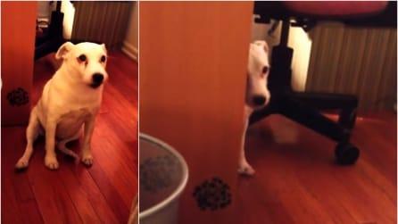 Il cane l'ha fatta grossa e quando la sua padrona lo scopre, la sua reazione è esilarante