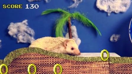 Il criceto che diventa Sonic: l'esilarante esperimento