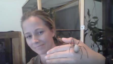 Lei è una grande amante dei ragni: lo fa salire sulla mano ed ecco cosa fa