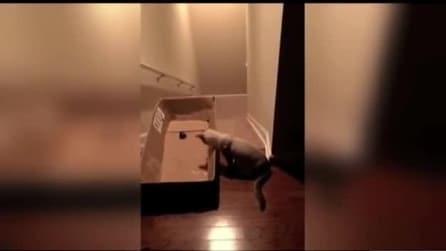 Mette un cartone in cima alle scale: osservate cosa fa il gatto