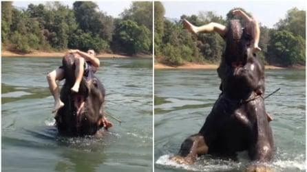 Si tuffa in acqua con l'elefante: quello che accade è da non credere