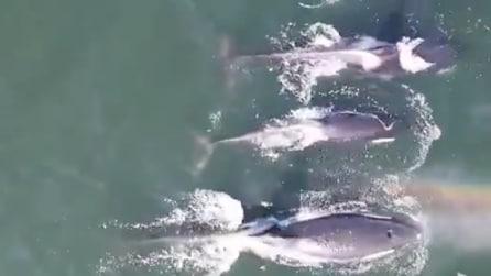 I legami familiari delle orche: le straordinarie riprese con il drone ti emozioneranno