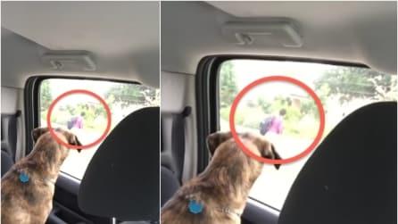 Il padroncino va a scuola e la reazione del suo cane vi spezzerà il cuore