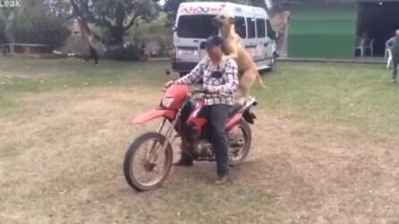 Il padrone gli propone un giro in moto: ecco la reazione del cane