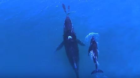 La balena e il delfino nuotano con i loro piccoli: le emozionanti immagini