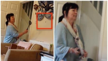La mamma cerca di uccidere il ragno con una spatola: il figlio riprende l'esilarante scena