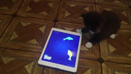 Il gatto vede i pesciolini sullo schermo: quello che fa è troppo divertente