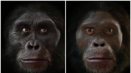 Dalla scimmia all'uomo: l'evoluzione umana in pochi secondi