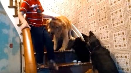 Il cane è terrorizzato dal gatto: ma guardate cosa succede dopo