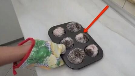 C'è qualcosa di insolito nello stampo dei muffins: non immaginerete mai di cosa si tratta