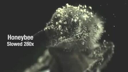 Ecco come si lavano gli insetti