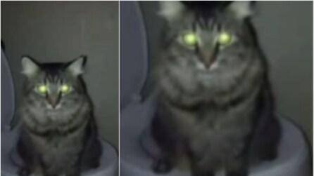 Va in bagno e trova il gatto sul water, quello che sta facendo lo lascia senza parole