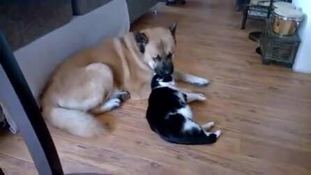 Cane e gatto si fanno le coccole: un momento davvero tenero