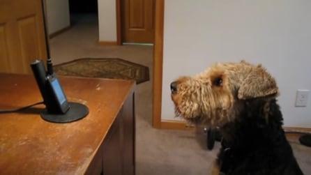 Squilla il telefono e Stanley comunica così con la sua padrona