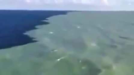 Il Golfo dell'Alaska dove due mari si incontrano ma non si mischiano