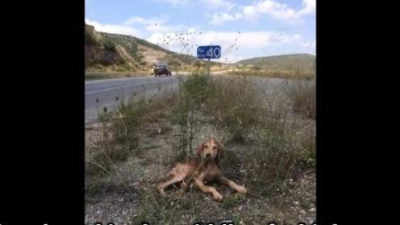 Lo trovano abbandonato sul ciglio della strada: la commovente storia di Melios