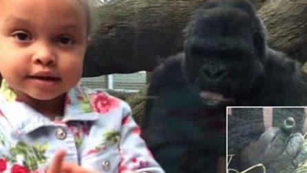 """Il gorilla """"insegna"""" il gesto del dito medio alla bimba: ecco la reazione della mamma"""