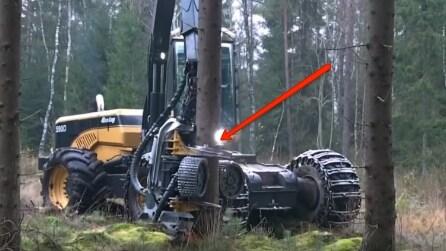Si avvicina all'albero e afferra il tronco: ecco cosa è in grado di fare questo macchinario