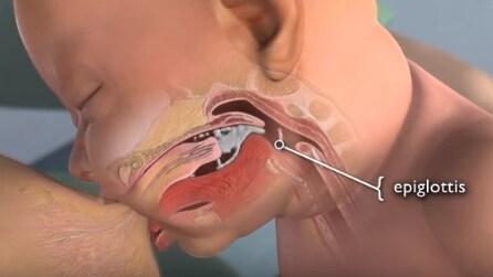 Ecco cosa avviene nel bambino durante l'allattamento al seno