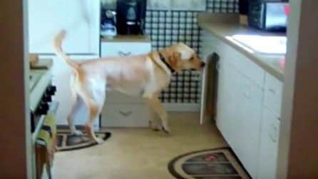 La padrona gli dà un ordine: non crederete a quello che fa il cane in cucina