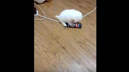 Arriva una chiamata al cellulare: quello che fa il cane ti farà troppo ridere