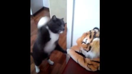 Vede il peluche sul mobile: si alza sulle due zampette ed ecco cosa fa il gatto
