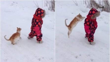 Il gatto coglie il bambino di sorpresa saltandogli addosso e guardate cosa succede