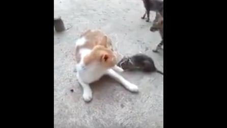 Il topo morde la coda del gatto: ecco chi ne esce vincitore